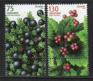 Iceland 2006 Local Berries - - Attractive Fruit Topical (1082 - 83) photo