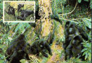 (72392) Maxicard - Rwanda - Gorilla - 1985 photo