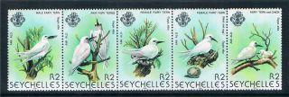 Seychelles 1981 Birds (3rd Series) Sg 500a photo