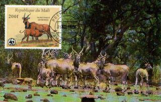 (72368) Maxicard - Mali - Eland - 1986 photo