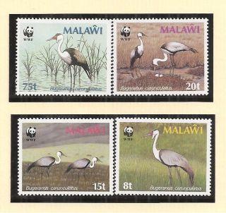 (72391) Malawi Wattled Crane - U/m 1987 photo