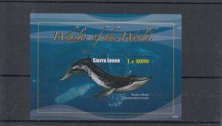 Sierra Leone 2011 Whales Of The World 1v Sheet I Bryde ' S Whale photo