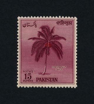 Pakistan 95 Coconut Tree photo