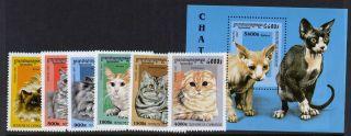 Cambodia 1624 - 30 Cats,  Animals photo