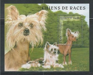 Cambodia 1644 Dogs,  Tufted Chinese Breed Souvenir Sheet photo