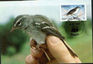 (70397) Maxicard - Dominica - Warbler 1984 photo