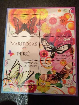 Peru 2011 Butterflies photo