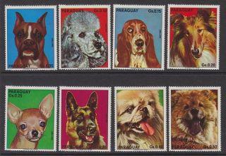 Paraguay - 1975 Dogs (8v) Um / photo