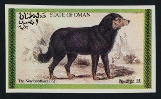 Oman Cinderellas Dogs,  Cat photo