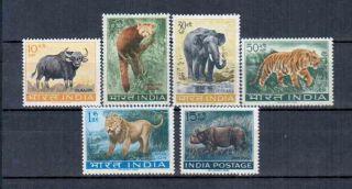 India Animals photo