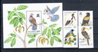 Uganda Birds photo