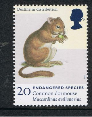 Common Dormouse Illustrated On 1998 British Stamp - Nh photo