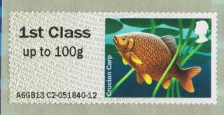 Crucian Carp (freshwater Fish) Illustrated On 2013 Self - Adhesive Gb Stamp photo
