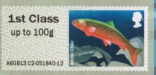 Arctic Char (freshwater Fish) Illustrated On 2013 Self - Adhesive Gb Stamp photo
