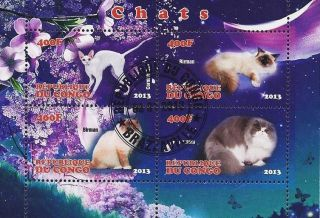 2013 Republic Of Congo Postage Mini - Sheet Of 4 Cats Feline Persian Birman Cto photo