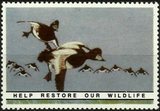 Greater Scaup,  National Wildlife Federation,  Year 1938,  Reprinted In 1987, .  - photo