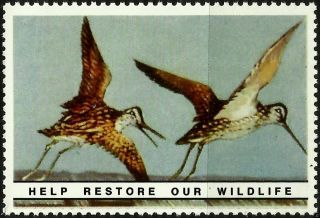 Common Snipe,  National Wildlife Federation,  Year 1938,  Reprinted In 1987, .  - photo