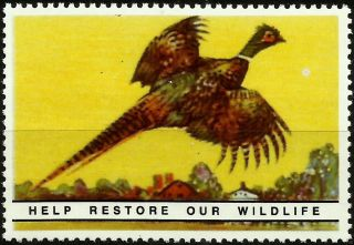 Common Pheasant,  National Wildlife Federation Year 1938,  Reprinted In 1987, photo