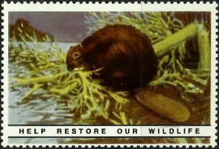 Beaver,  National Wildlife Federation,  Year 1938,  Reprinted In 1987, .  - photo