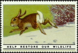 White Cottontail,  National Wildlife Federation Year 1938 Reprinted In 1987 photo