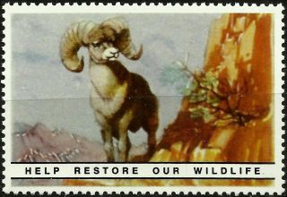 Big Horn Ram,  National Wildlife Federation,  Year 1938 Reprinted In 1987, photo