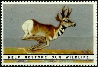 Pronghorn Antelope National Wildlife Federation Year 1938 Reprinted In 1987, photo