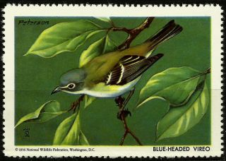 National Wildlife Federation Stamp,  Year 1956,  Blue Headed Vireo, photo