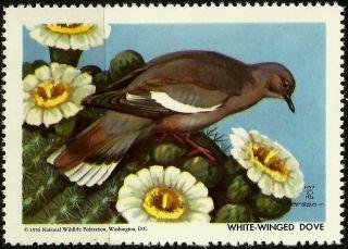 National Wildlife Federation Stamp,  Year 1956,  White - Winged Dove, photo