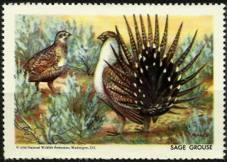 National Wildlife Federation Stamp,  Year 1956,  Sage Grouse, photo