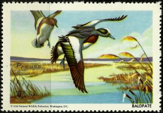 National Wildlife Federation Stamp,  Year 1956,  Baldpate, photo