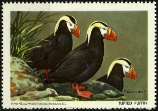 National Wildlife Federation Stamp,  Year 1956,  Tufted Puffin, photo