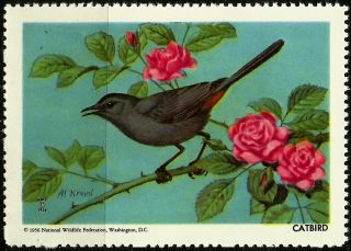 National Wildlife Federation Stamp,  Year 1956,  Catbird, photo