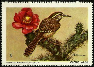 National Wildlife Federation Stamp,  Year 1956,  Cactus Wren, photo