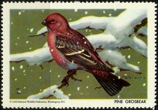 National Wildlife Federation Stamp,  Year 1956,  Pine Grosbeak, photo