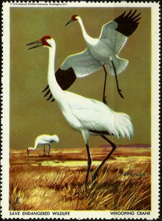 National Wildlife Federation Stamp,  Year 1956,  Whooping Crane, photo