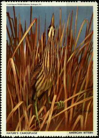 National Wildlife Federation Stamp,  Year 1956,  American Bittern, photo
