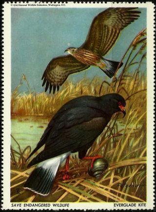 National Wildlife Federation Stamp,  Year 1956,  Everglade Kite, photo