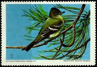 National Wildlife Federation Stamp,  Year 1970,  Western Wood Pewee, photo
