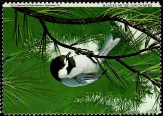 National Wildlife Federation Stamp,  Year 1970,  Blackcapped Chickadee, photo