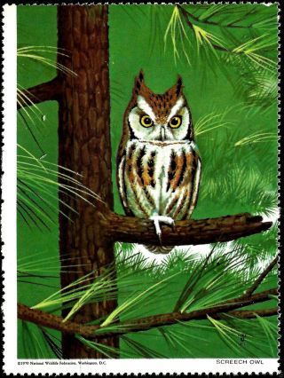 National Wildlife Federation Stamp,  Year 1970,  Screech Owl, photo