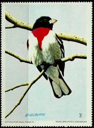 National Wildlife Federation Stamp,  Year 1970,  Rose - Breasted Grosbeak, photo