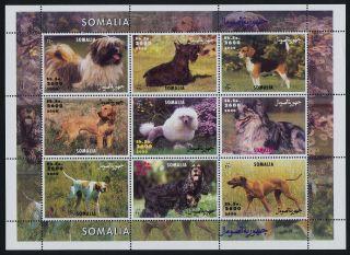 Somalia Sheet Dogs photo