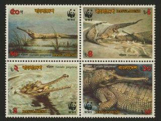 Bangladesh 343a Crocodiles photo