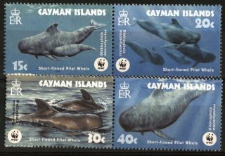Cayman Islands 2003 Worldwide Fund For Nature (wwf) Fish/whales Sc 902 - 905 photo