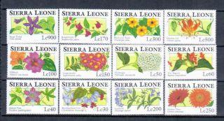 Sierra Leone Flowers photo