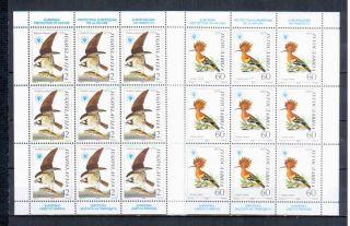 Yugoslavia Birds photo