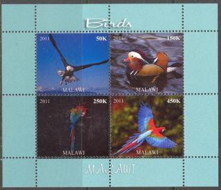 2011 Birds Viii Parrots Ducks Eagle Sheet Of 4 Mdbc1029 photo