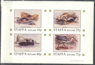 Staffa (br.  Local) 1981 Birds Viii Ducks Sheet 4 Imperf.  Ns278 photo