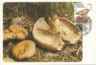 Andorra Española / Spanish Andorre Mushrooms 1983 photo