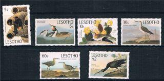 Lesotho 1985 John Audubon Sg 646/51 photo